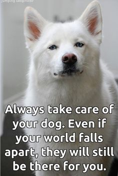 Always take care of your dog. Even if your world falls apart, they will still be there for you.♥See more about phoenix dog training at k9katelynn.com! From your friends at phoenix dog in home dog trainingk9katelynn see more about Scottsdale dog training at k9katelynn.com! Pinterest with over 18,300 followers! Google plus with over 120,000 views! You tube with over 400 videos and 50,000 views!! Twitter 2200 plus;)