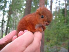 A baby squirrel