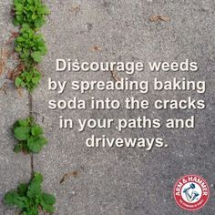 Weed killer: Discourage weeds by spreading baking soda into the cracks in your paths and driveways.