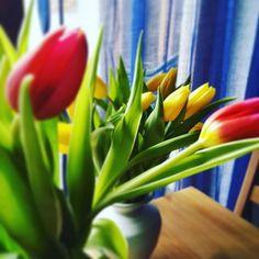 #springishere #tulip #frommyhubby