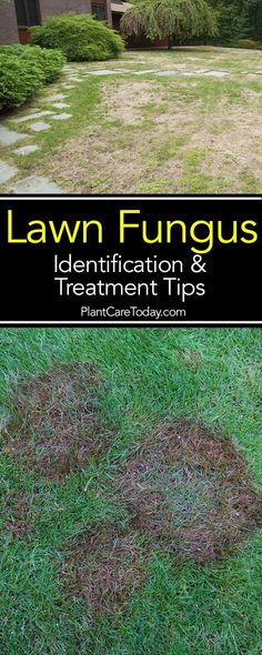 Lawn Grubs 7 Steps For Getting Rid Grub Worms In Your Yard Lawn