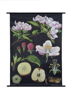 Apple Tree Botanical Poster - The Evolution Store - $198.00 - domino.com