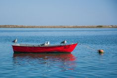 'Four Birds in a Boat' by Kelly Love on artflakes.com as poster or art print $16.63 #birds #boat #photography #forsale