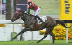 Helene Happy Star (IRE) 2011 B.g. (Zamindar (USA)-Harvest Queen (IRE) by Spinning World (USA) 1st Queen Mother Memorial Cup (HK-G3,2400mT,Sha Tin) (photo: Kenneth Chan)