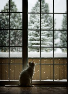 """""""First Snow"""" by CasaBay_Photo 