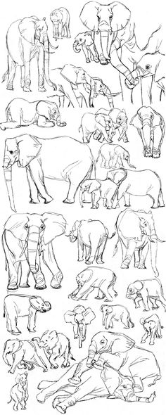 Ich lerne Elefanten zu malen, also habe ich ein paar Bilder online gefunden und … I'm learning to draw elephants, so I found a bunch of pictures online and drew from them. Can you guess what my year film will be abou… - Monde Des Animaux Animal Sketches, Animal Drawings, Drawing Sketches, Art Drawings, Sketching, Drawing Lessons, Drawing Techniques, Art Lessons, Poses References