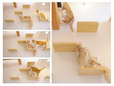 more awesome cat shelves! apparently not all cat furniture has to be covered in nasty carpet...