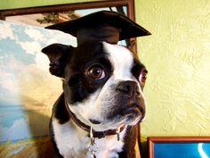 college graduate by EllenJo, via Flickr