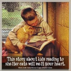 A different kind of hero, but heroes none the less ! Kids reading to shelter cats at a program that is operated by the Animal Rescue League of Berks County, Penn. Huge thank you to the kids and the Animal Rescue League ♥♥ Crazy Cat Lady, Crazy Cats, Animals And Pets, Cute Animals, Funny Animals, Funniest Animals, Animal Rescue League, Photo Chat, Faith In Humanity Restored