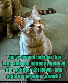 Funny Animal Memes To Leave You Laughing Cat's Cute # Funny Animal Pictures, Cute Funny Animals, Cute Cats, Adorable Kittens, Funny Cat Memes, Funny Cats, Hilarious, Funny Horses, Funny Quotes