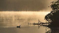 Rustig vaarwater - Nancy Carels