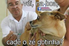 Véi, na boa, cadê o Zé Gotinha? Dankest Memes, Funny Memes, Jokes, Funny Cats, Funny Animals, Icarly, Otaku Meme, Daddy Yankee, Funny Photos
