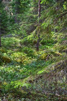 Ilvesmäen Rouva: Hyvä elämä Mountains, Lady, Nature, Travel, Naturaleza, Viajes, Destinations, Traveling, Trips
