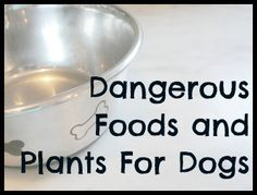A list of dangerous foods and plants for dogs
