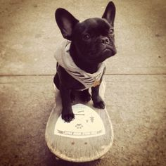 .@mypetmonzie | Skateboarding dog sponsored by #crywolf #woofpack