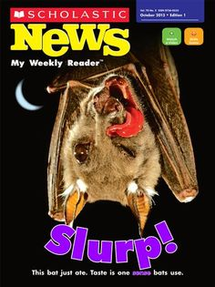 """Scholastic News 1 online edition: Bats' five senses with link to """"Night Flyers"""" 2 minute video"""