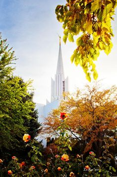 The Jordan River, Utah, LDS, (Mormon) Temple is a beautiful building. This view with the roses really caught my eye and I love this one.
