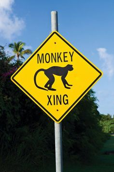 Road signage for the second largest populaton of inhabitants of the island-The Vervet Green Back Monkey