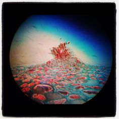Conidiophores fungus microscopy magic science