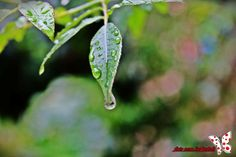 #photography #nature #water drop