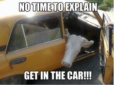 Cute Funny Animals, Funny Animal Pictures, Funny Cute, Funny Images, The Funny, Hilarious, Irish Memes, Funny Farm, Animal Memes