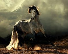 Beautiful horses around the world have evolved around 5 million years ago from multi toed cells to single toed animals.Let's look at 25 most beautiful horses in world Most Beautiful Horses, All The Pretty Horses, Animals Beautiful, Horse Photos, Horse Pictures, Photo Animaliere, Andalusian Horse, Arabian Horses, Arabian Stallions