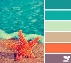 summer hues starfish color palette