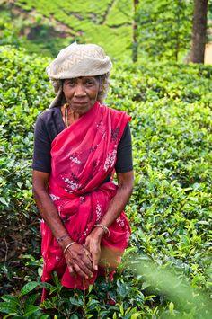 Experience the tea plantations of Sri Lanka.