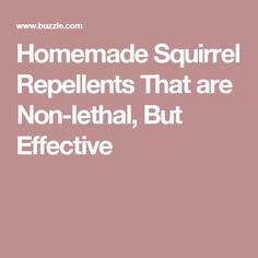 Homemade Squirrel Repellents That are Non-lethal, But Effective