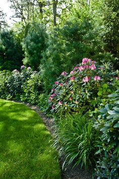 Add rhododendrons & perennials in front of evergreens