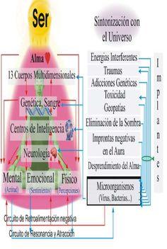 Que és el biomagnetismo holográfico multidimensional