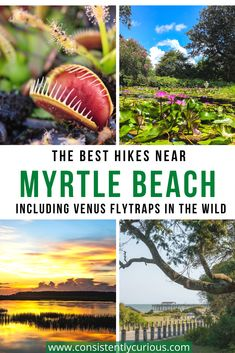 Did you know Myrtle Beach is one of the few spots Venus Flytraps grow wild? Take a look at these awesome hiking trails near Myrtle Beach for an adventure beyond the beach! #myrtlebeach #venusflytraps #hiking #familyvacation #southcarolina #hikinginsouthcarolina South Carolina Vacation, Myrtle Beach South Carolina, Travel With Kids, Family Travel, Mrytle Beach, Vacation Trips, Vacation Ideas, Travel Usa, Travel Tips