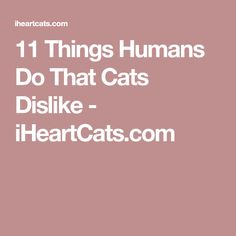 11 Things Humans Do That Cats Dislike - iHeartCats.com