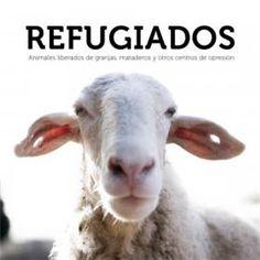 Refugiados. Animales liberados de granjas, mataderos y otros centros de…