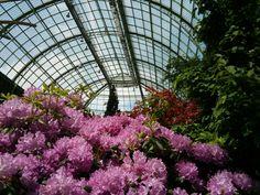 Expo Jardin - Grand Palais - juin 2013