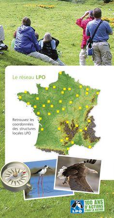La LPO c'est la LPO France (siège national à Rochefort, antennes, ...) et un réseau de 42 structures réparties dans tout le pays, représentant la LPO à l'échelle d'un département ou d'une région.