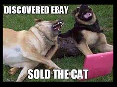 Discovered Ebay.... Sold the  Cat!
