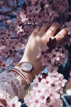 Check out this awesome post: Ideas fotos en color rosa Beautiful Flowers Wallpapers, Beautiful Nature Wallpaper, Pretty Wallpapers, Leaf Photography, Girl Photography Poses, Creative Photography, Eiffel Tower Photography, Hand Fotografie, Daniel Wellington Classic Petite