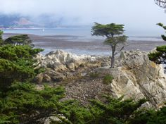 Pebble Beach San Francisco Google Search California Pinterest