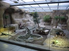 Amazing Iguana Enclosure. Love to have one in the future.