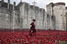 Symbolically, the last poppy will be planted on November 11 – Armistice Day. | 12 Stunning Pictures Of The Ceramic Poppies Outside The Tower Of London
