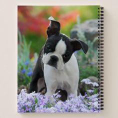 #Boston Terrier Dog Cute Puppy Animal Head Photo  Notebook - #boston #terrier #puppy #dog #dogs #pet #pets #cute #bostonterrier