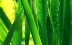 Folhas & Caules
