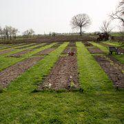 Realizarea grădinii de la țară Vineyard, Projects To Try, Country Roads, Outdoor, Lawn, Plant, Outdoors, Vine Yard, Vineyard Vines