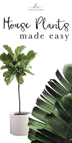 house plants made easy | Linen and Ivory