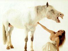 www.pegasebuzz.com | Equestrian Sophie Marceau