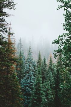 Misty mornings.