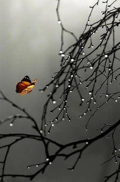 Explore amazing art and photography and share your own visual inspiration! Rain Wallpapers, Cute Wallpapers, Wallpaper Backgrounds, Rain Photography, Amazing Photography, Beautiful Nature Wallpaper, Still Life Photos, Nature Pictures, Pretty Pictures