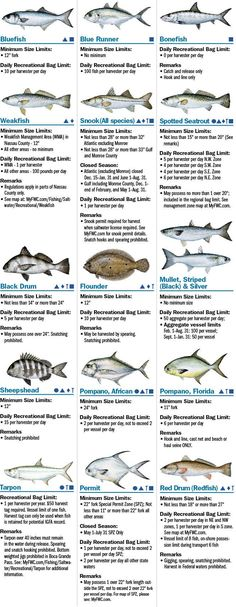 Coastal Species | Florida Saltwater Fishing Regulations | eRegulations.com
