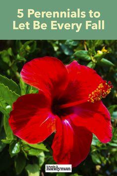 5 Perennials You Should Let Be Fall